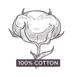 Cotton hundred percent natural material monochrome vector