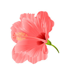 flower tropical plant hibiscus pink vector image