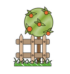 orange tree in garden vector image