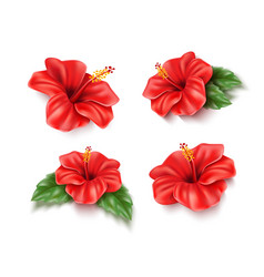 red hibiscus realistic tropical flower set vector image