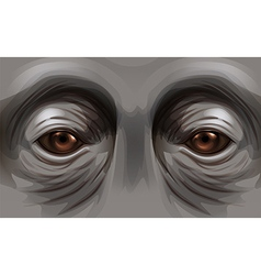 Eyes of an orangutan vector