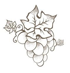 Grape Branch vector