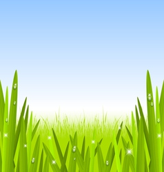 Morning grass copyspace vector image vector image