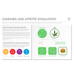 Cannabis and appetite stimulation horizontal vector