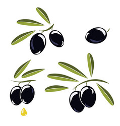 icon of olives branch with black olives and vector image