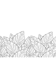 Leaves border background vector