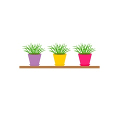 Three colorful pots with growing grass on shelf vector image