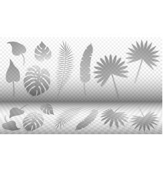 Tropical leaves shadow overlay templates vector