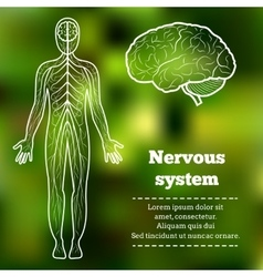 human body nervous system vector image vector image
