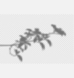shadow overlay effect transparent shadow leaves vector image