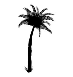 Silhouette of coconut palm tree isolated on white vector