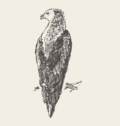 Sitting eagle hand draw sketch vector