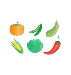 collection of vegetables pumpkin green bean vector image
