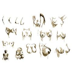 Diversity of women-s breasts vector