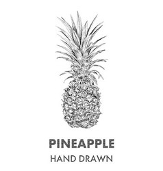 Sketch of pineapple Hand drawn Fruit collection vector image