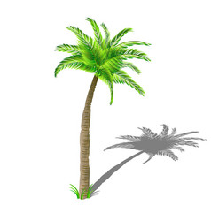 coconut palm tree with shadow with green leaves vector image vector image