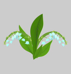 spring flowers lilies of the valley sketch vector image