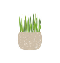 fresh green grass in a rectangular and round pot vector image