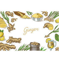 ginger root poster or banner chopped rhizome vector image