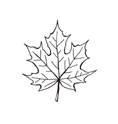 Leaf icon isolated vector