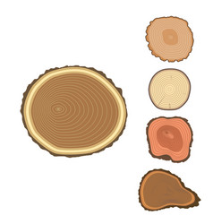 Tree wood trunk slice texture circle cut wooden vector