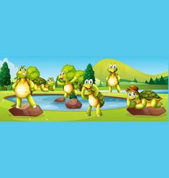 Turtles in pond scene vector