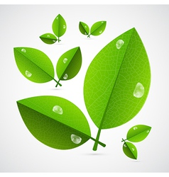 Abstract Green Leaves Isolated on White Background vector image vector image