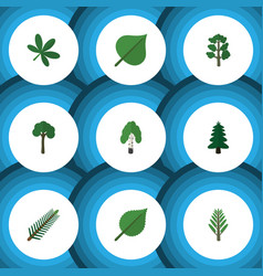 Flat icon ecology set of linden maple evergreen vector