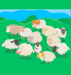 Flock of sheep cartoon vector