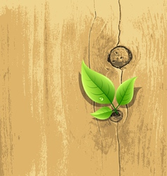 Green Leaf on old wood background vector image
