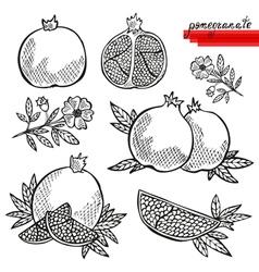 pomegranates vector image