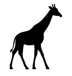 Silhouette giraffe flat isolated white vector