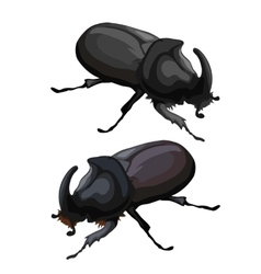 Black beetle rhinoceros on white background vector image vector image