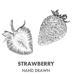 Sketch of strawberry Hand drawn Fruit collection vector