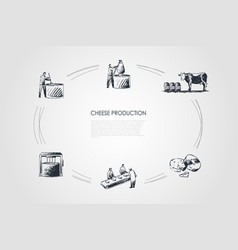 cheese production - taking milk from cow vector image