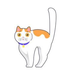 Cute cat with big eyes blue collar on neck vector