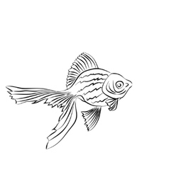 Goldfish image on white background vector image