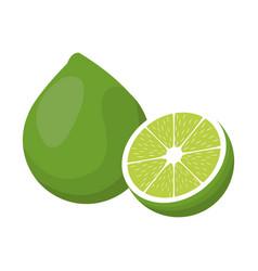 Lemon citurs fruit tropical half vector