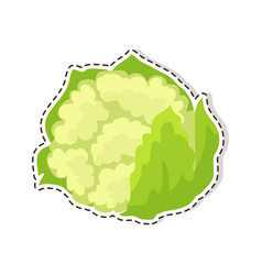 Ripe cauliflower flat isolated sticker or vector