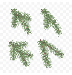 Set of realistic fir branches christmas tree or vector