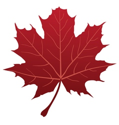 leaf red vector image vector image