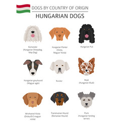 Dogs country origin hungarian dog breeds vector