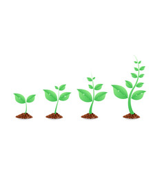 phases plant growing planting tree infographic vector image