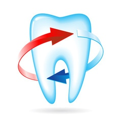 tooth with arrows vector image