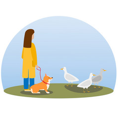 A woman walking dog happy cute dog welsh corgi vector