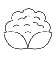 cauliflower thin line icon vegetable and diet vector image
