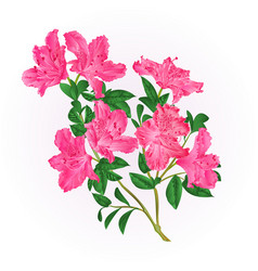 Pink rhododendron twig with flowers and leaves vector