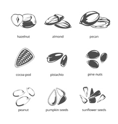 Seeds and nuts monochrome icons vector