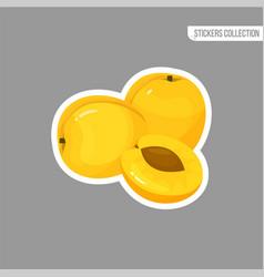 Cartoon fresh apricot isolated sticker vector