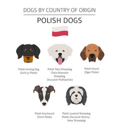 Dogs by country of origin polish dog breeds vector